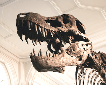 T-Rex at Manchester Museum